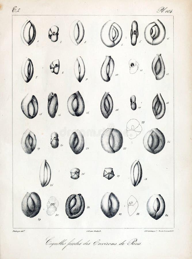 Immagine di arte Impronta digitale immagine stock
