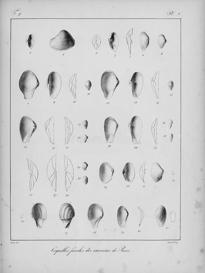Immagine di arte Impronta digitale fotografia stock