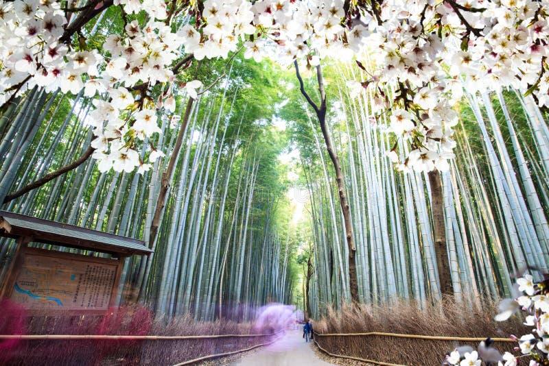 Immagine di bello seasnon di sakura a Kyoto, Giappone immagine stock