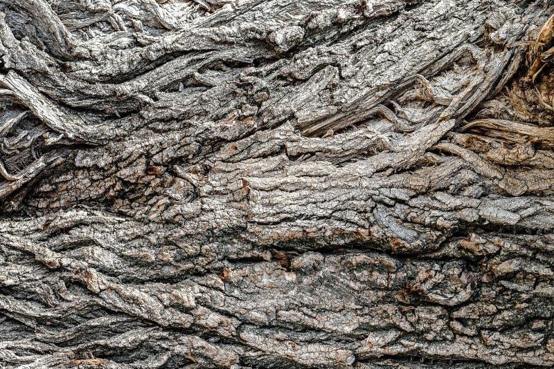 Immagine di colore del primo piano della corteccia di albero fotografie stock