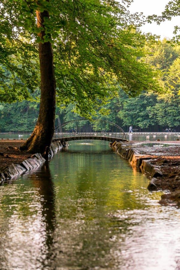 Immagine di piccolo ponte sopra il lago durante il tramonto fotografia stock libera da diritti