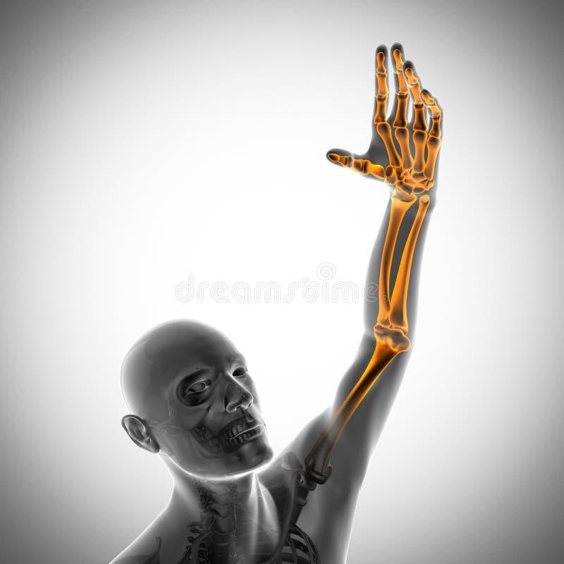 Immagine di ricerca della radiografia delle ossa dell'essere umano royalty illustrazione gratis