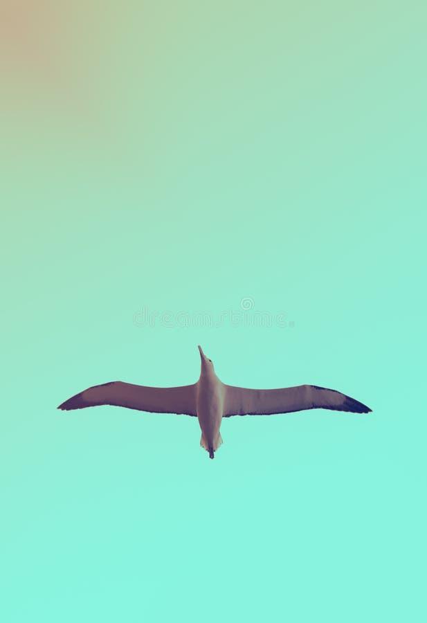 Immagine di sfondo dell'albatro di volo immagine stock
