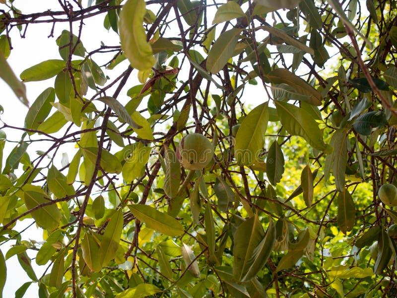 Immagine di sfondo delle foglie verdi con pizzo verde fotografie stock