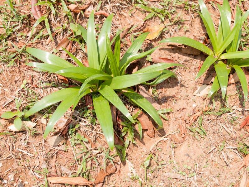 Immagine di sfondo delle foglie verdi su terra fotografie stock libere da diritti