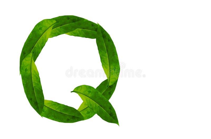Immagine di sfondo verde della lettera Q della foglia Alfabeto naturale della foglia della foresta immagine stock libera da diritti
