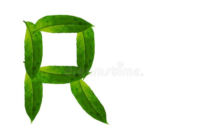 Immagine di sfondo verde della lettera R della foglia Alfabeto naturale della foglia della foresta fotografia stock