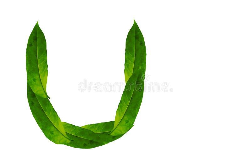 Immagine di sfondo verde della lettera U della foglia Alfabeto naturale della foglia della foresta fotografie stock