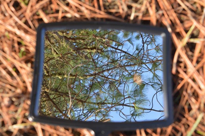 Immagine di specchio del cielo immagine stock
