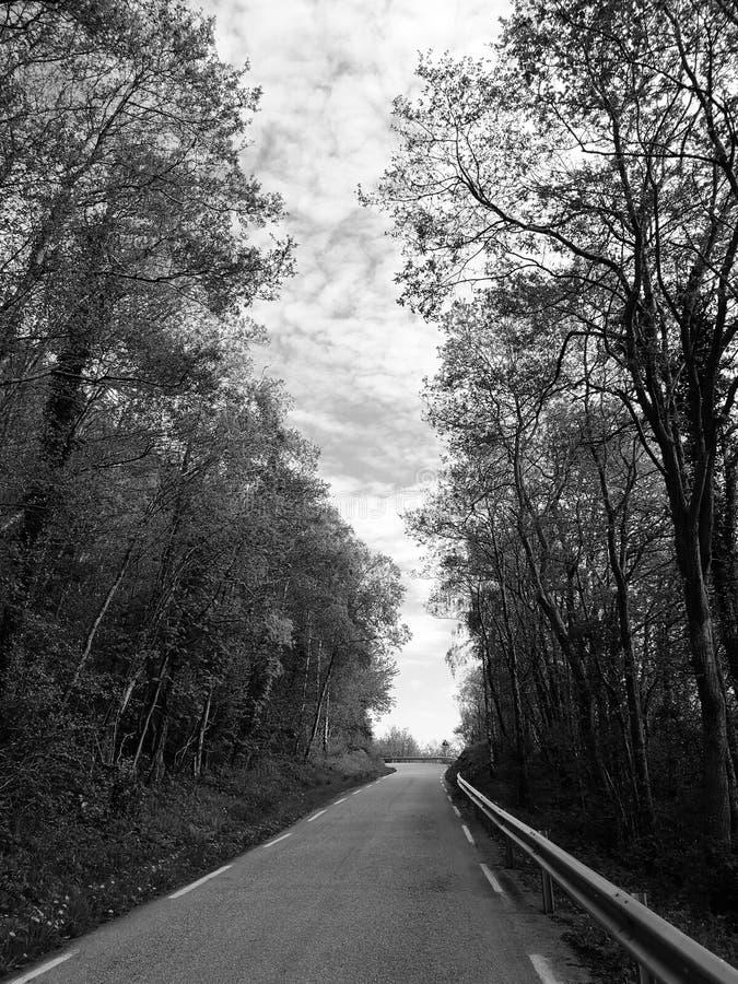 Immagine di una strada asfaltata con gli alberi lungo i lati in bianco e nero fotografia stock libera da diritti