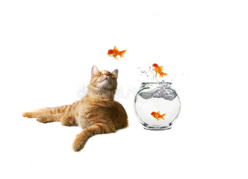 Immagine divertente di sorveglianza del gatto fotografia stock libera da diritti