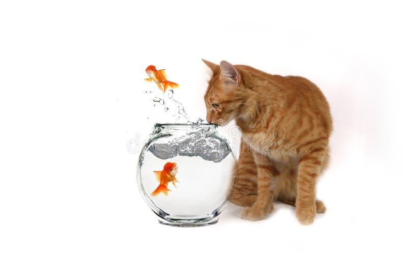 Immagine divertente di sorveglianza del gatto fotografie stock libere da diritti