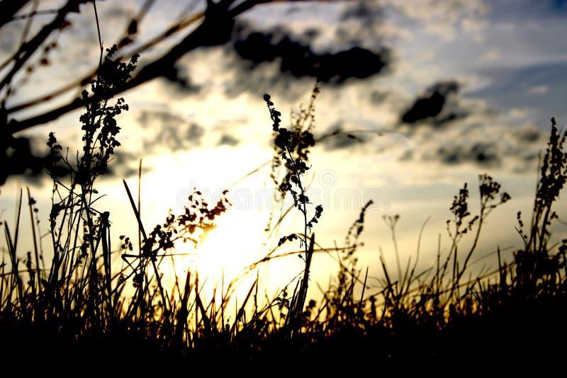 Immagine forte di contrapposizione di tramonto immagine stock libera da diritti