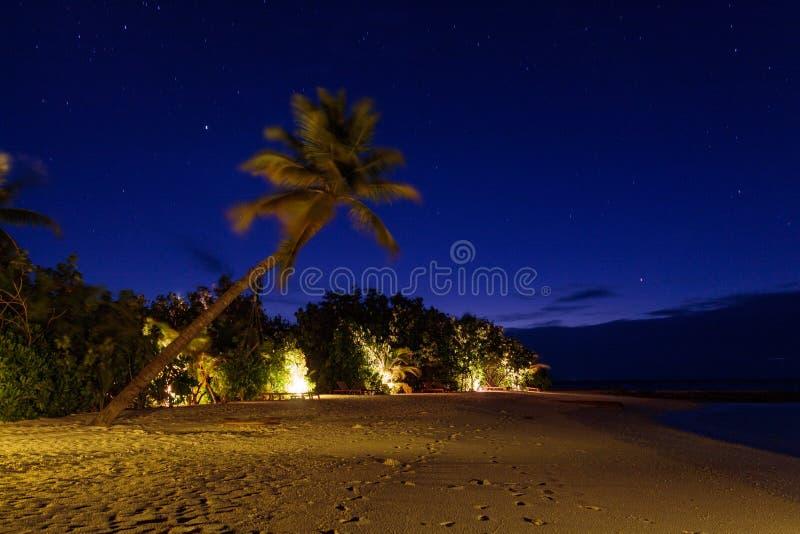 Immagine lunga di esposizione di una palma e un'oscillazione durante la notte fotografia stock