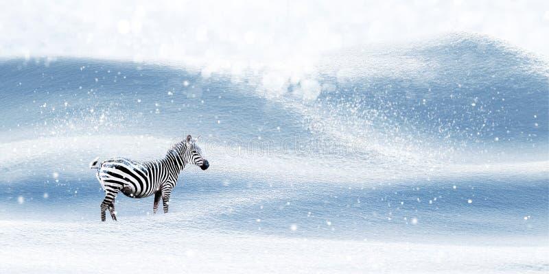 Immagine magica di Natale di inverno Zebra su un fondo nevoso snowfall Paese delle fate di inverno Spazio libero per testo fotografia stock