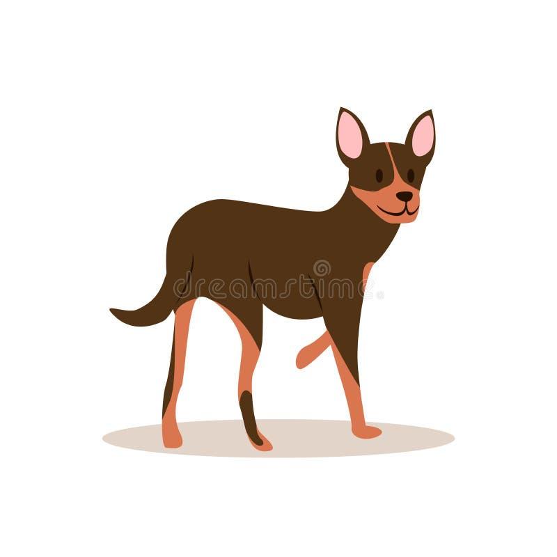Immagine raster di una chihuahua marrone che guarda indietro illustrazione di stock