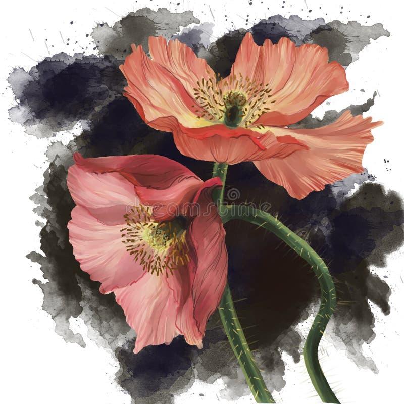 Immagine realistica dei fiori disegnati a mano del papavero fotografia stock