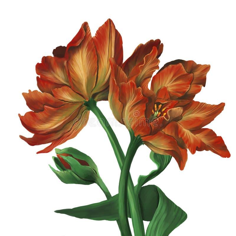 Immagine realistica dei tulipani disegnati a mano immagine stock