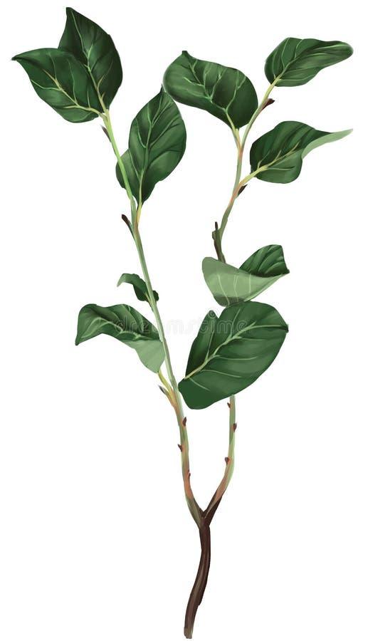 Immagine realistica di un ramo con le foglie fotografie stock libere da diritti