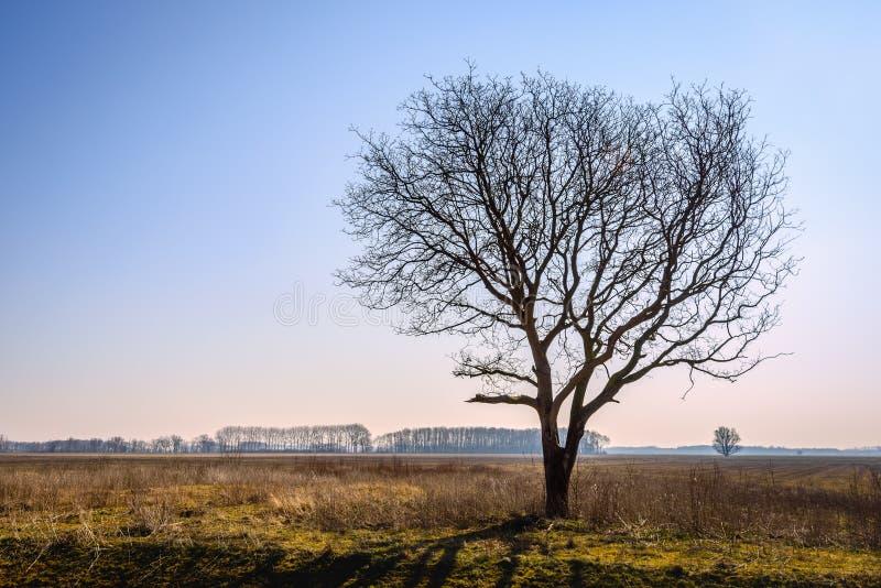 Immagine retroilluminata di un albero solo in un paesaggio vuoto fotografie stock libere da diritti