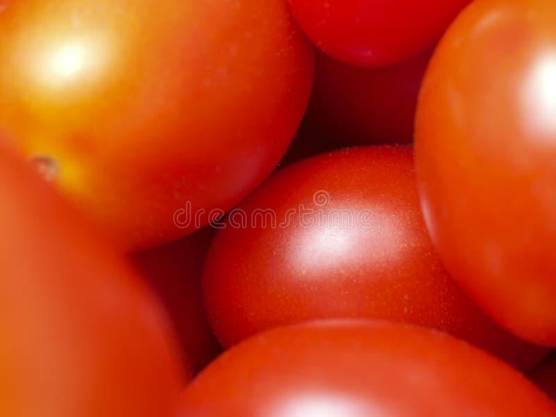 Immagine rossa di alcuni pomodori nel complesso immagini stock libere da diritti