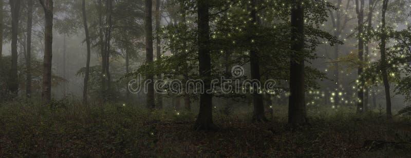 Immagine sbalorditiva del paesaggio di stile di fantasia delle lucciole nella notte Tim immagini stock