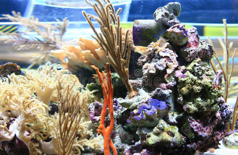 Immagine subacquea immagini stock libere da diritti