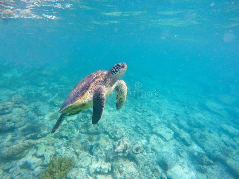 Immagine subacquea con la tartaruga del mare immagine stock