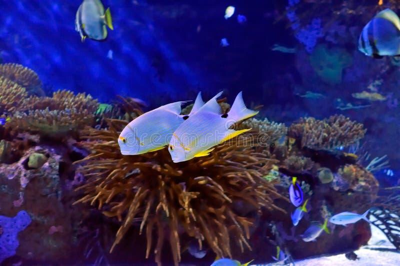 Immagine subacquea dei pesci fotografia stock