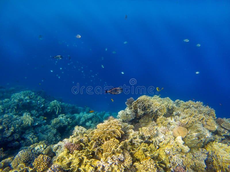 Immagine subacquea della barriera corallina e dei pesci tropicali fotografia stock libera da diritti