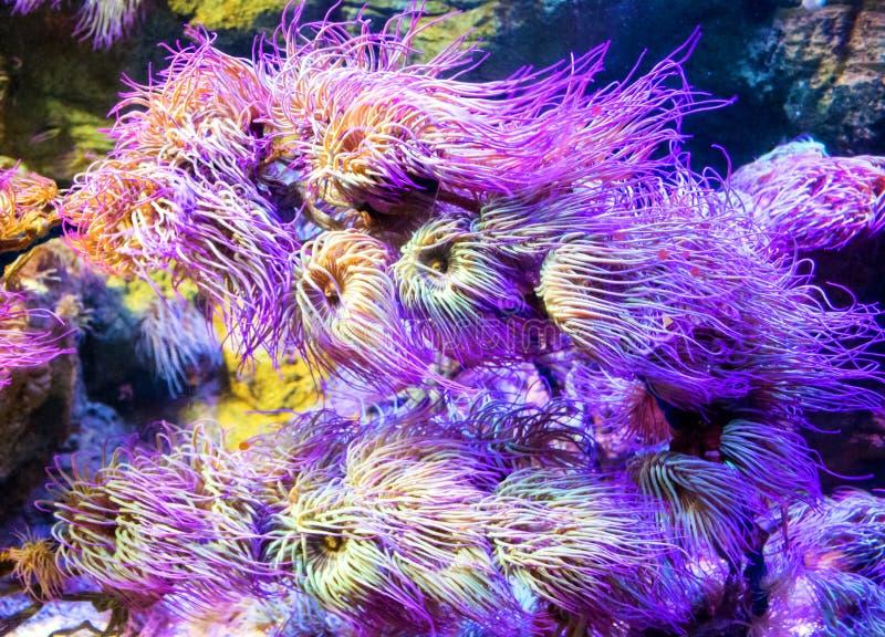 Immagine subacquea delle piante tropicali variopinte immagine stock