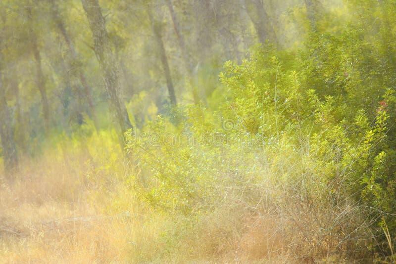 immagine vaga autunnale della foresta alla luce di tramonto fotografia stock libera da diritti