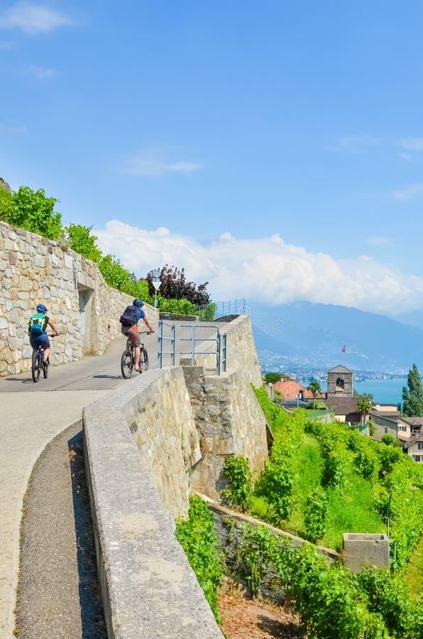 Immagine verticale dei ciclisti che guidano sul percorso panoramico lungo le vigne a terrazze sulle colline dal lago Lemano, Sviz fotografia stock