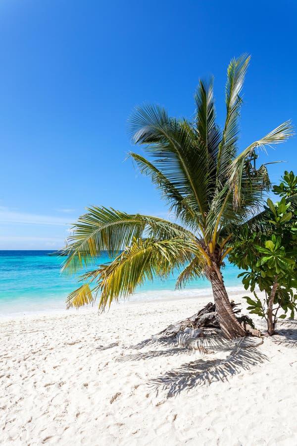 Immagine verticale di bella isola tropicale fotografia stock