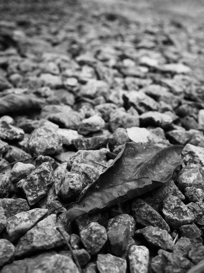 Immagini in bianco e nero delle foglie secche che cadono su una superficie rocciosa Per lo sfondo naturale immagine stock