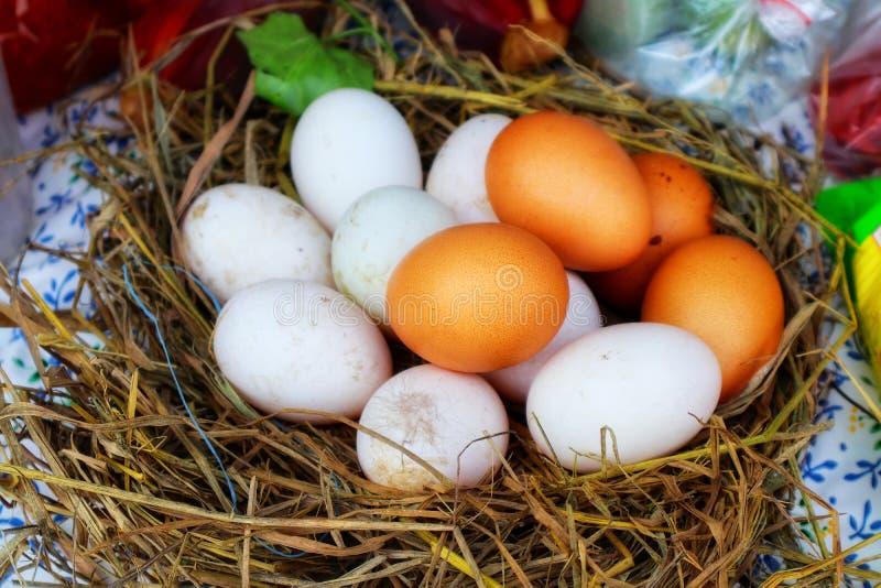 Immagini del primo piano delle uova dell'anatra e delle uova nella paglia dell'alimento, festival del pollo di Pasqua immagini stock libere da diritti