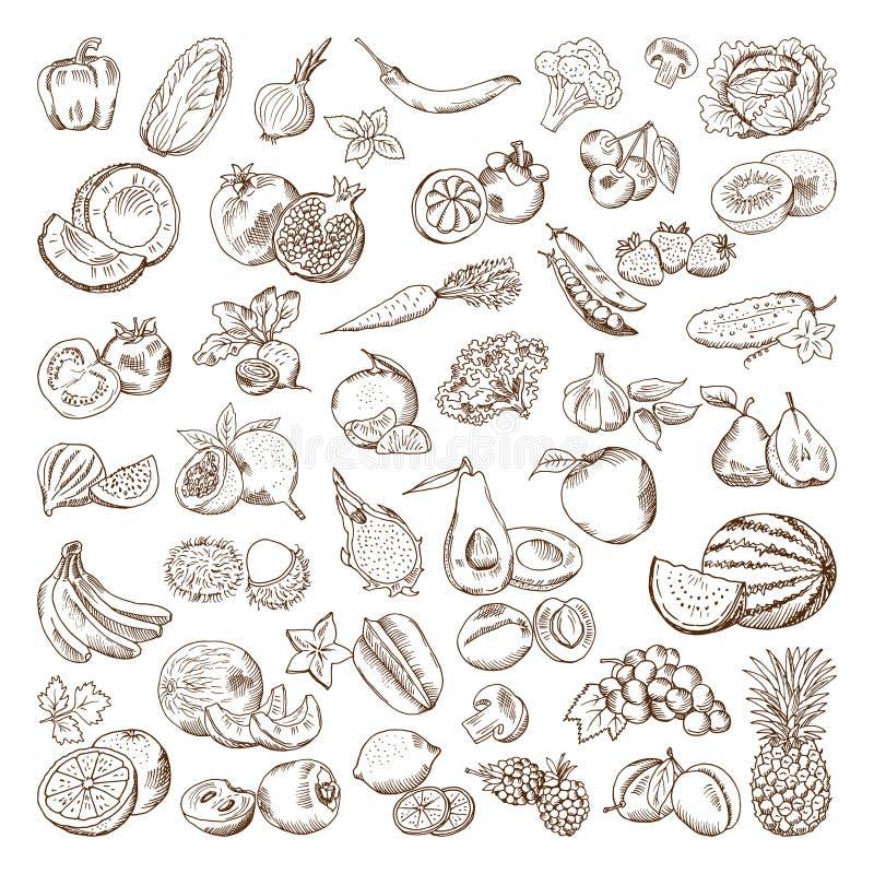Immagini disegnate a mano di vettore della frutta e delle verdure Illustrazioni dell'alimento del vegano di scarabocchio illustrazione di stock