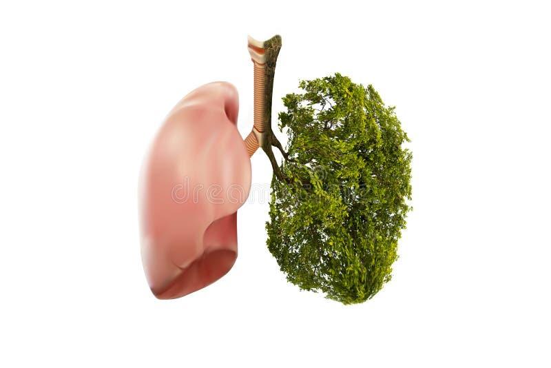 Immagini a forma di albero di verde del polmone, concetti medici, autopsia, esposizione 3D ed animali come elemento immagine stock libera da diritti