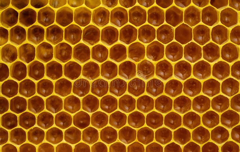 Immature honey in honeycombs royalty free stock images