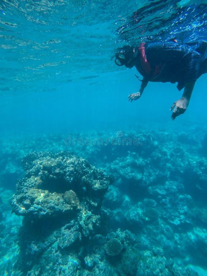 Immergendosi con il giubbotto di salvataggio stupito vedendo le barriere coralline Principiante che impara immergersi fotografia stock libera da diritti
