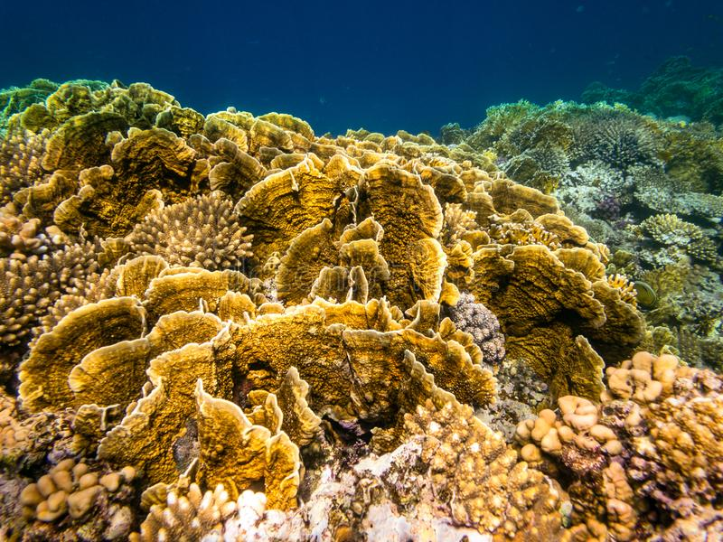 Immergendosi in Marsa Alam, l'Egitto Coral Reef immagine stock