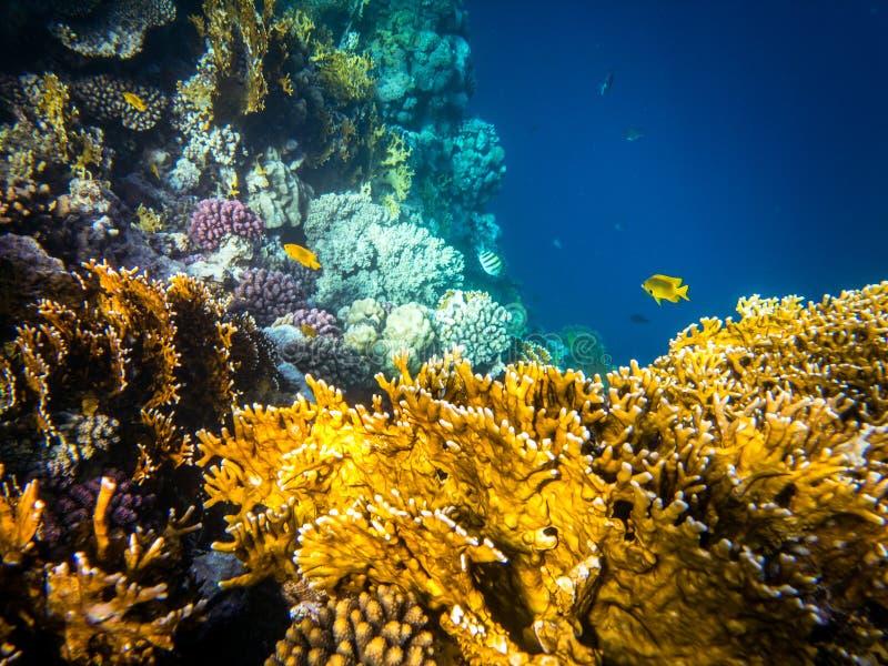 Immergendosi in Marsa Alam, l'Egitto Coral Reef immagini stock libere da diritti