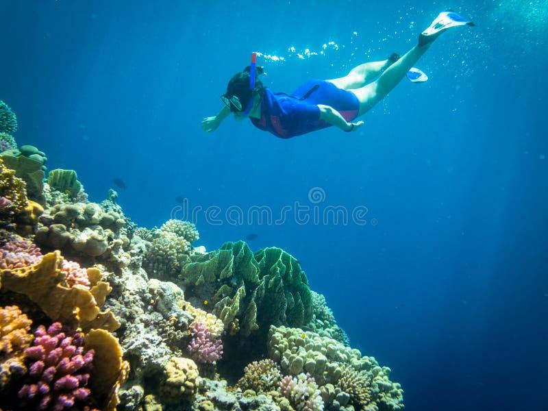 Immergendosi in Marsa Alam, l'Egitto Coral Reef fotografia stock