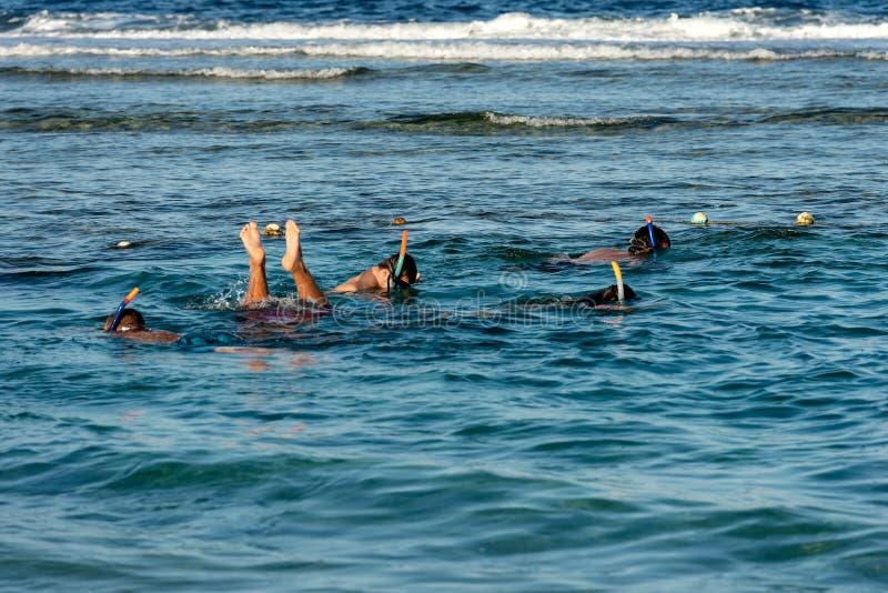 Immergendosi sopra Coral Reef - Mar Rosso Egitto immagini stock