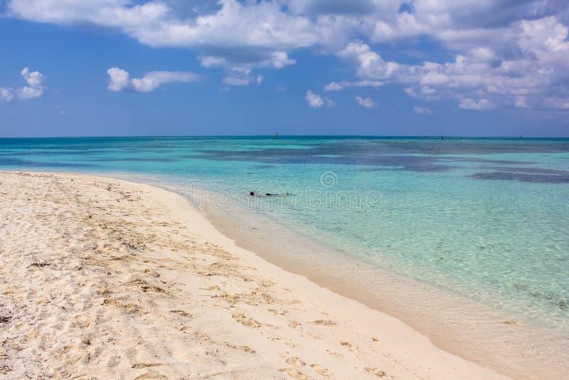 Immergendosi in Tortugas asciutto immagini stock libere da diritti