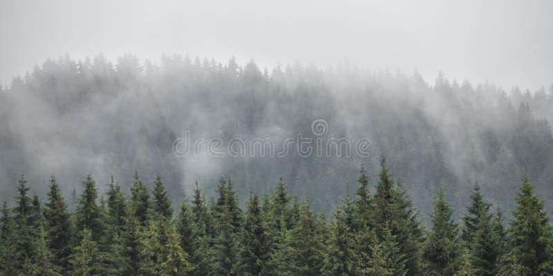 Immergrüne Tannen, Lärchenkiefernwald mit Nebel und tiefe Wolken Nostalgischer Blick lizenzfreie stockbilder