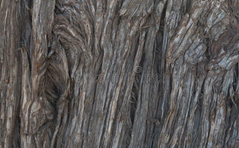 Immergrüner Baum-Abschluss oben bei Bill Evans Lake lizenzfreies stockbild