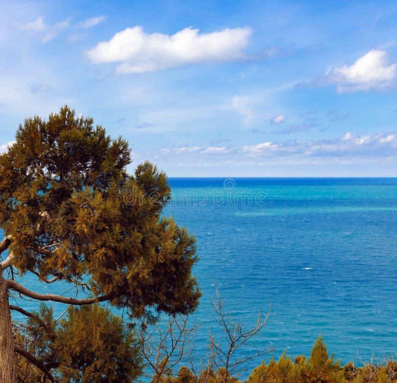 Immergrünes Juniperushoch ist Koniferenanlage der Klasse Wacholderbuschzypressengewächse stockfotos