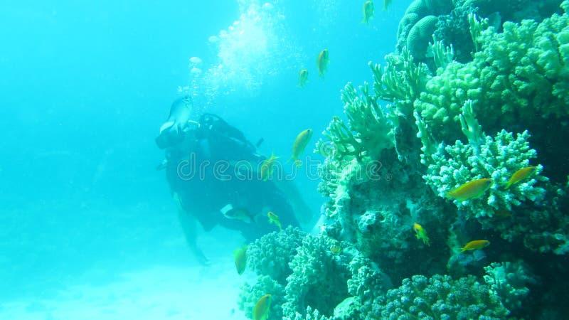 Immersione subacquea del Mar Rosso immagine stock