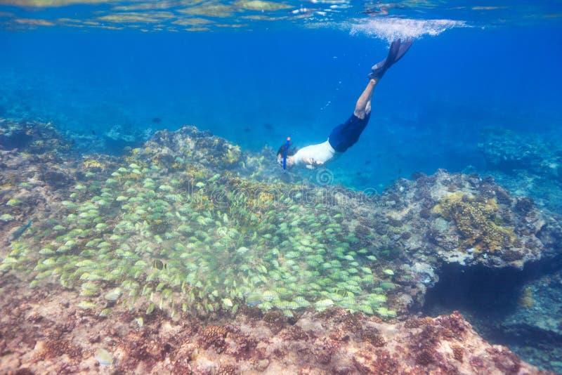 Immersione subacquea dell'uomo verso il banco dei pesci fotografia stock libera da diritti